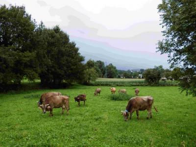 Agence AVEC - Vallée d'Ossau